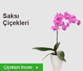 Saksılı Çiçekler
