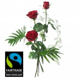 3 Red Fairtrade Max Havelaar-Roses, medium stem wi
