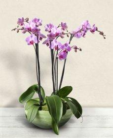 Özel Pembe Orkide