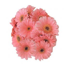 Gerbera Bunch - Pink