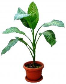 Single Green Plant