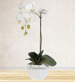 Spesiyal Tek Dallı Orkide