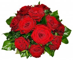Tantalizing 12 Roses